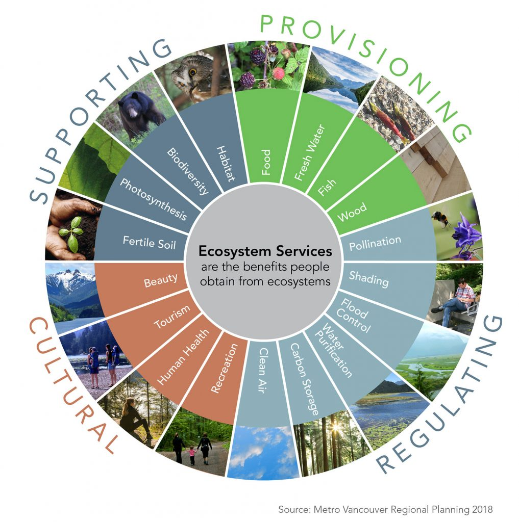 Diagram of ecosystem services provided by healthy ecosystems