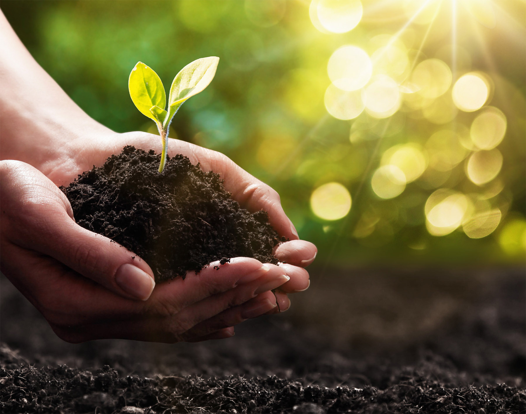 hands holding a seedling in earth