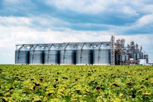 Sunflower oil factory farm