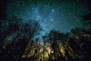 Starry sky with trees silhouetted