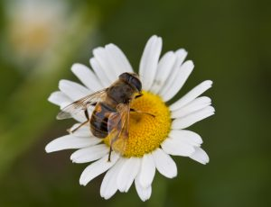 Pollinators and native plants are nature's partnership.